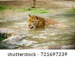 Jaguar Drinking Water