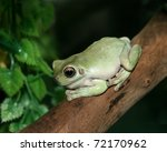 young frog | Shutterstock . vector #72170962