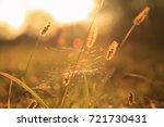 autumn meadow at sunset | Shutterstock . vector #721730431
