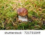boletus edulis  english  penny... | Shutterstock . vector #721731049