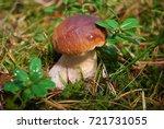 boletus edulis  english  penny... | Shutterstock . vector #721731055