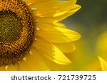 sunflower natural background ... | Shutterstock . vector #721739725