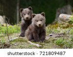 Stock photo wild brown bear cub close up 721809487