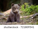 young brown bear in the forest. ... | Shutterstock . vector #721809541
