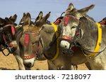 Donkey's On A Beach At A U.k....