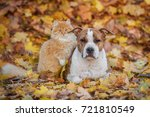 Stock photo cat and dog in autumn 721810549