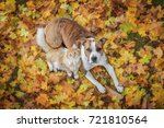 Stock photo cat and dog lying on the leaves in autumn 721810564