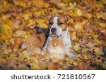 Stock photo cat and dog lying in the leaves in autumn 721810567