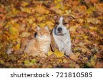 Stock photo friendship of cat and dog in autumn 721810585