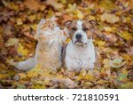 funny cat playing with a dog in ... | Shutterstock . vector #721810591