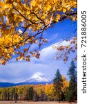 Small photo of View of Mt Adams surrounded by autumn colored leaves, west central Washington near Klickitat.