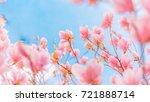 amazing flowering pink blossoms ... | Shutterstock . vector #721888714