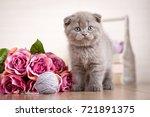 scottish kitten portrait. cat...   Shutterstock . vector #721891375