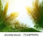 coconut palm tree in vintage... | Shutterstock . vector #721899091