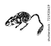 jerboa   picture | Shutterstock .eps vector #721920619