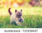 Stock photo cute little kitten walking outdoor in the grass 721928437