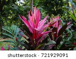 seychelles endemic and unique... | Shutterstock . vector #721929091