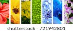 collage with different flowers   Shutterstock . vector #721942801