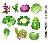 green salad leaves. vector... | Shutterstock .eps vector #721986601