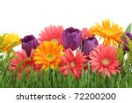 Stock photo spring flowers background 72200200