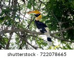 Great Hornbill At Khao Yai...