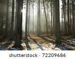 coniferous forest illuminated... | Shutterstock . vector #72209686