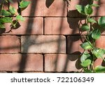 Small photo of ivy arum on brick wall with cookie light