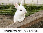 Stock photo little rabbit on the farm 722171287