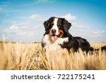 bernese mountain dog in the... | Shutterstock . vector #722175241