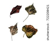 leaves  watercolor  can be used ... | Shutterstock . vector #722208421