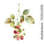 twig of raspberry isolated on... | Shutterstock . vector #722211031