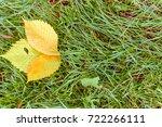 green tilia linden tree leaves