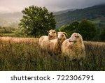 sheep grazing in a fog near old ... | Shutterstock . vector #722306791