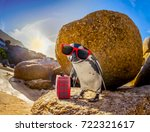 curious african penguin with... | Shutterstock . vector #722321617