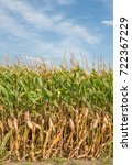 vertical image of tall field of ... | Shutterstock . vector #722367229