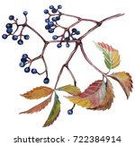 Autumn Branch Of Wild Grapes...