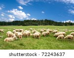A Lot Sheep On The Beautiful...