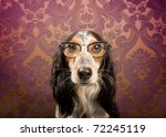 Stock photo dog with glasses and serious look 72245119