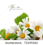 Stock photo daisy flowers in white background selective dof 72245362