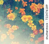 Small photo of Beautiful marigolds in garden (Tagetes erecta, Mexican marigold, Aztec marigold, African marigold)