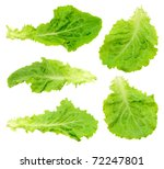 set green salad leaf isolated | Shutterstock . vector #72247801