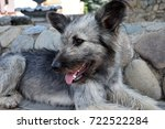 homeless dog  photo at the... | Shutterstock . vector #722522284