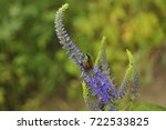 beautiful bug sits on a blue... | Shutterstock . vector #722533825