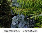 shade garden plant combination | Shutterstock . vector #722535931