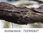 wood | Shutterstock . vector #722542627