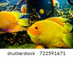 photo of a tropical fish on a... | Shutterstock . vector #722591671