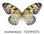 beautiful butterfly isolated on ... | Shutterstock . vector #722595271