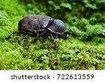 brown rhinoceros beetle female... | Shutterstock . vector #722613559