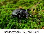 brown rhinoceros beetle female... | Shutterstock . vector #722613571