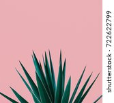 plant on pink.  tropical greens ... | Shutterstock . vector #722622799